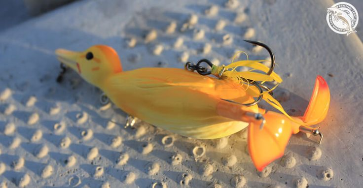Savage Gear 3D Suicide Duck #fishing #lure #pike #fishingtest