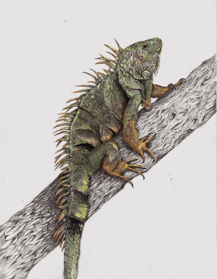 #ilustracion #iguana #illustration #art #design
