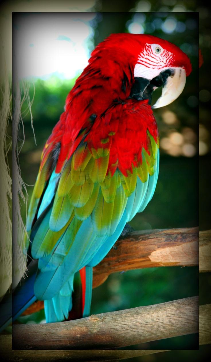 Parrot At Gulf World Panama City Beach Fl Animals Tierische Bewohner Der Erde Pinterest