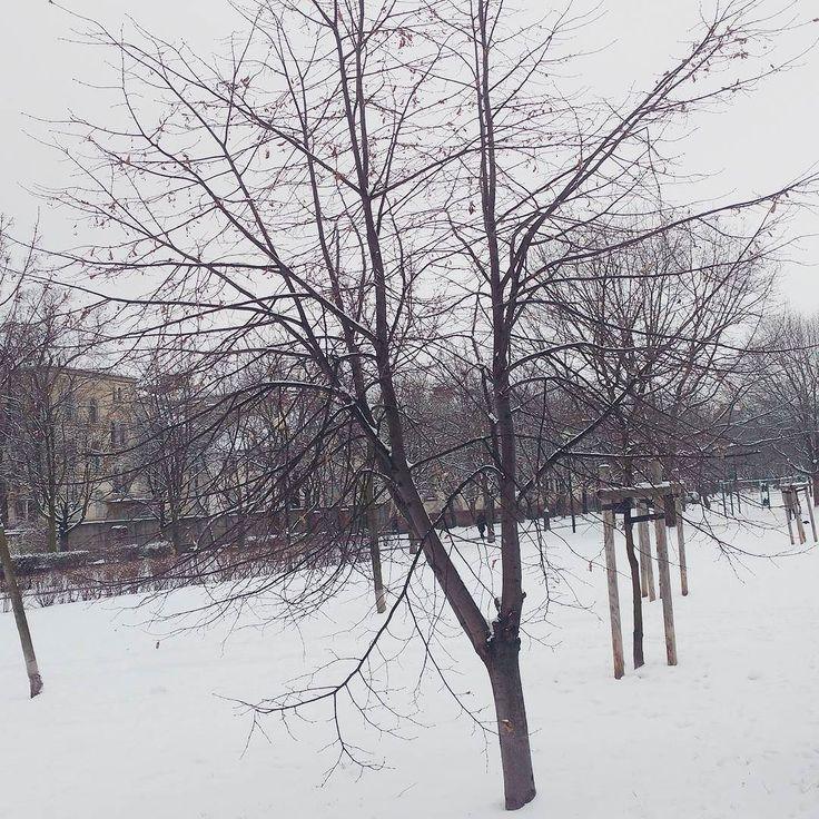 Dzień dobry  Poranny spacer i zimowy klimat :) Miłego piątku :) #newday #winter #winterview #view #landscape #zima #snieg #spacer #poranek #aktywny #piatek #widoki #zimowykrajobraz #zimowyklimat #zima