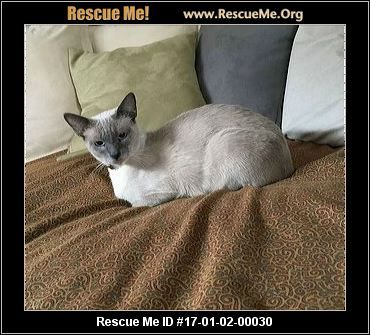 ― California Siamese Rescue ― ADOPTIONS ― RescueMe.Org  young adult, good with cats and dogs. Had a litter.