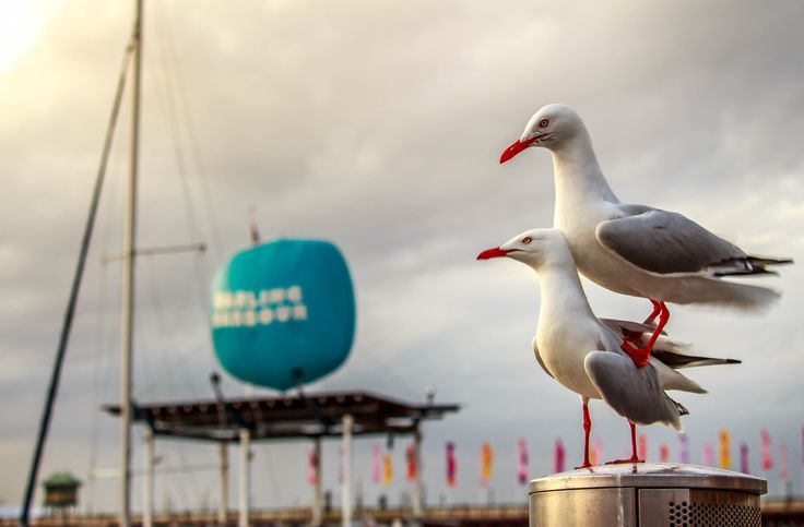 a couple of seagulls by Danh Nguyen on 500px