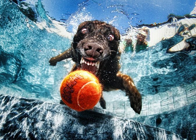 LOVE the under water dog pictures!: Dogs Pics, Ball, Funny Dogs, Friends Photo, Dogs Photography, Underwater Photography, Underwater Dogs, Dogs Pictures, Seth Casteel