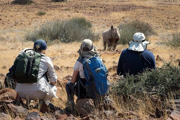 Tracking desert-adapted black rhino in Namibia