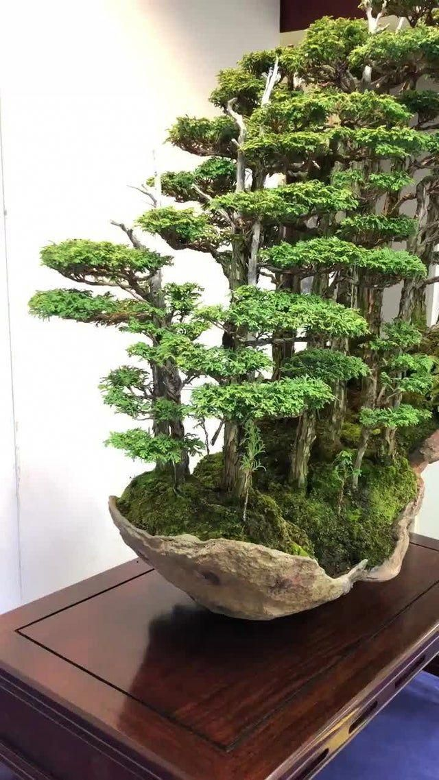 Reddit The Front Page Of The Internet Bonsaicuidados Indoor Bonsai Tree Bonsai Tree Types Indoor Bonsai