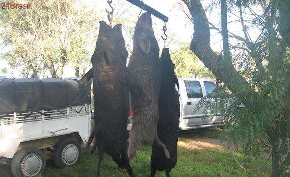 Retrocesso: caça de javali é legalizada em Santa Catarina