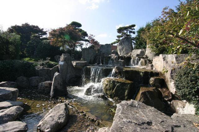 Japonské zahrady na světě.  Bonsai azalky, keře, květinové.  Školní keře A. Box