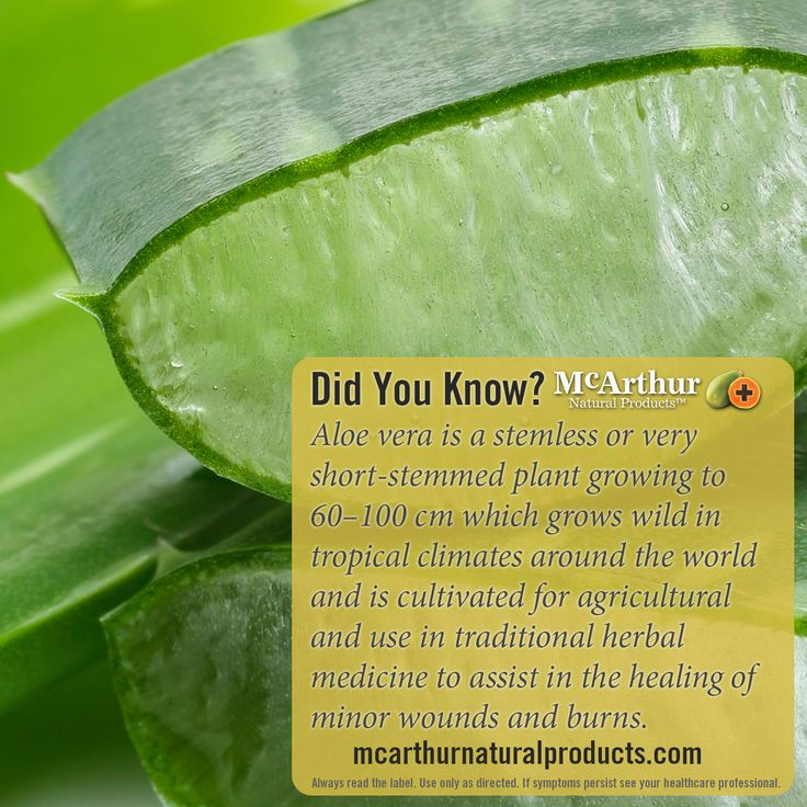 Did You Know?  Aloe vera is a stemless or very short-stemmed plant growing to 60–100 cm which grows wild in tropical climates around the world and is cultivated for agricultural and use in traditional herbal medicine to assist in the healing of minor wounds and burns.  Find out more about our Wounds & Burns Cream which contains aloe vera. http://mcarthurnaturalproducts.com/products/wounds-burns-cream-75g/   Always read the label. Use only as directed. If symptoms persist see your doctor.
