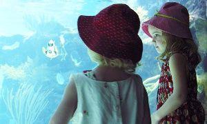 Groupon - Une entrée enfant ou adulte dès 7,99 € pour l'Aquarium de Lyon à La Mulatière. Prix Groupon : 7,99€
