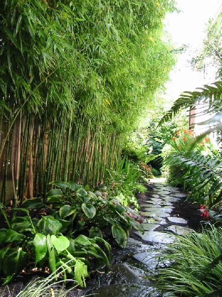 bamboo for screening - provided it's blended in with other plants to give a natural feel (not a geometric, fake-oriental look)