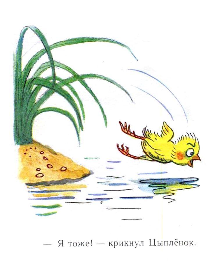 иллюстрации к сказке сутеева утенок и цыпленок несомненно