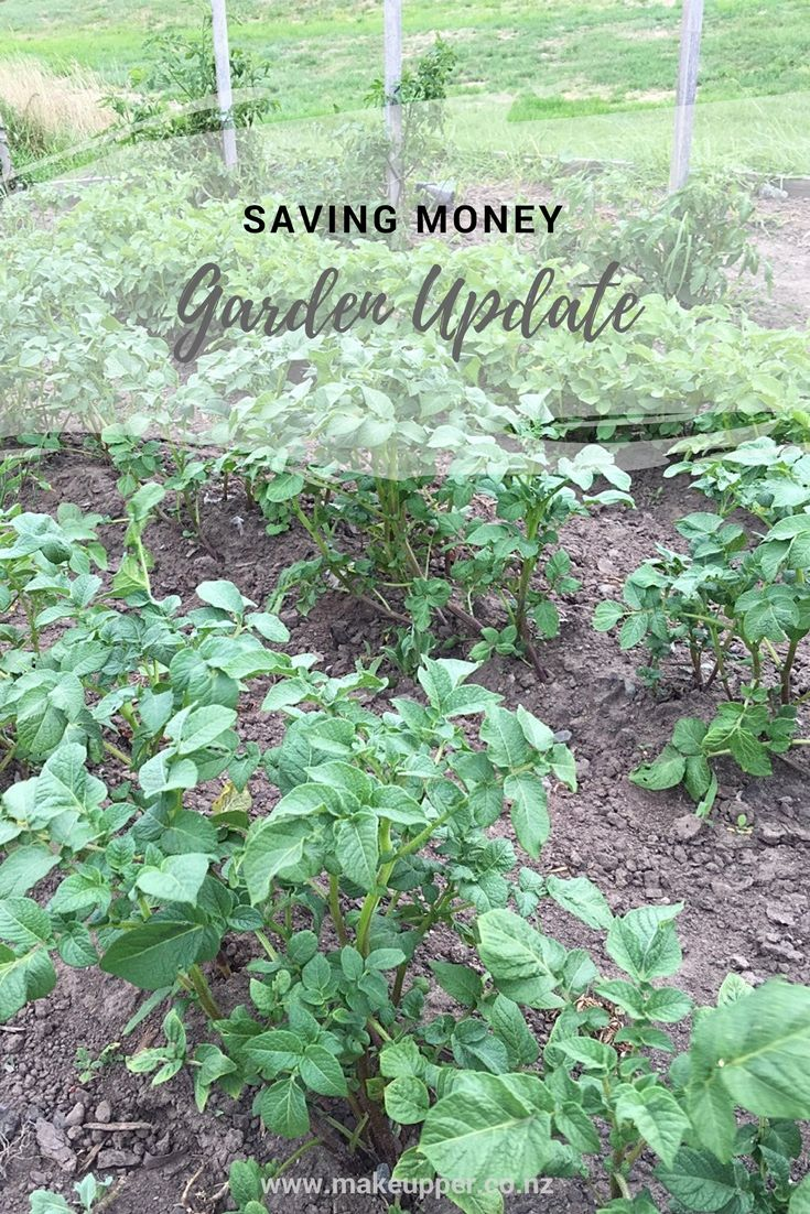 Step 1 in our saving money plan was starting a garden! And it's time for a garden update