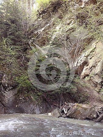Trees grown over rocks, nearby Casoca waterfall