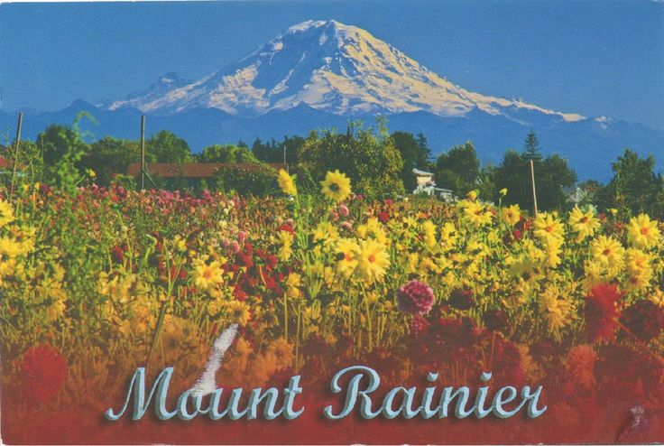 US-4897701 - Arrived: 2017.09.28   ---   Mount Rainier is the highest mountain of the Cascade Range of the Pacific Northwest, and the highest mountain in the U.S. state of Washington. It is a large active stratovolcano located 87 km south-southeast of Seattle, in the Mount Rainier National Park.
