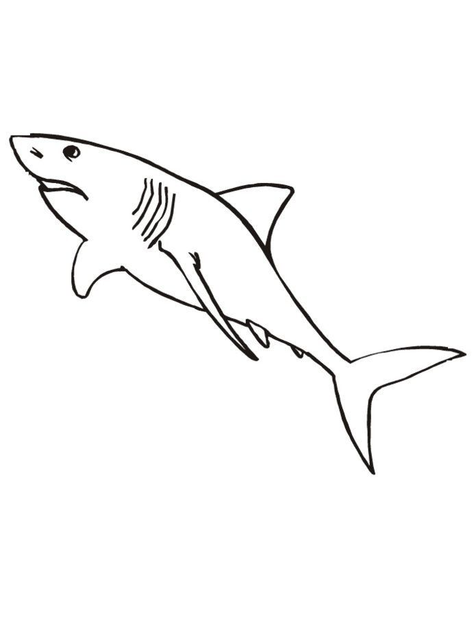 Great White Shark Coloring Pages Coloring Pages Coloring Pages Great White Shark Printa In 2020 Shark Coloring Pages Coloring Pages Printable Valentines Coloring Pages