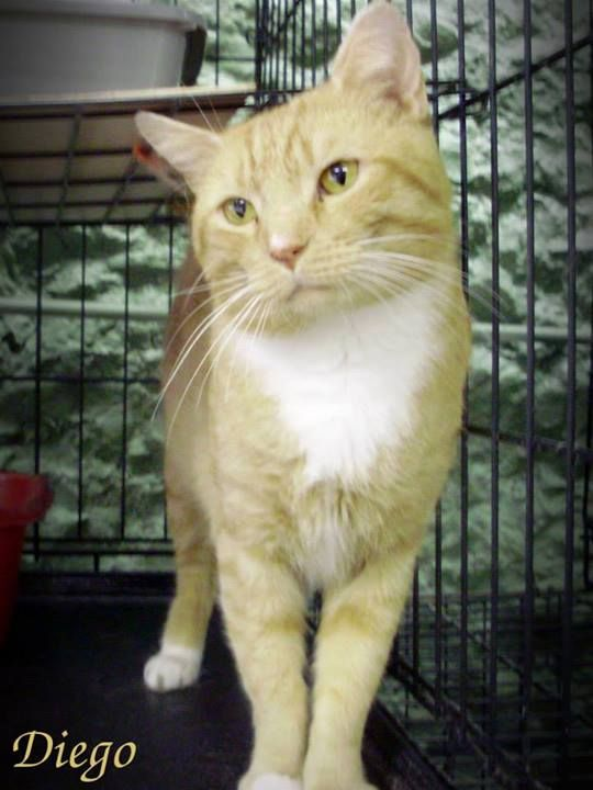 Lovables: Poca.hontas Co., WV: Please help the shelter is overwhelmed with CATS & especially KITTENS. Click on photo to see album.  For adoption or rescue info email: asapwva@gmail.com  PLEASE SHARE, TAG & CROSSPOST!  https://www.facebook.com/media/set/?set=a.257816394328194.48736.257761584333675&type=1