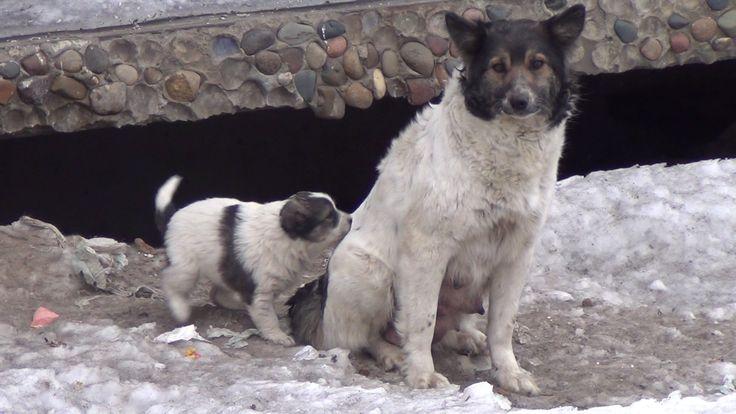 Помогает ли собачье мясо от туберкулеза? Щенки собаки. Собачатина.