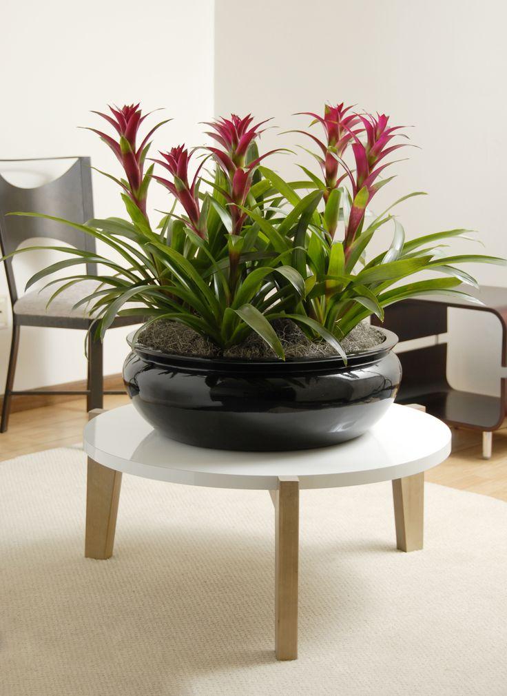 Perfect Bromeliads In A Beautiful Fiberglass Planter (from IndoorFlowerPots.com).  Indoor Flower PotsIndoor ...