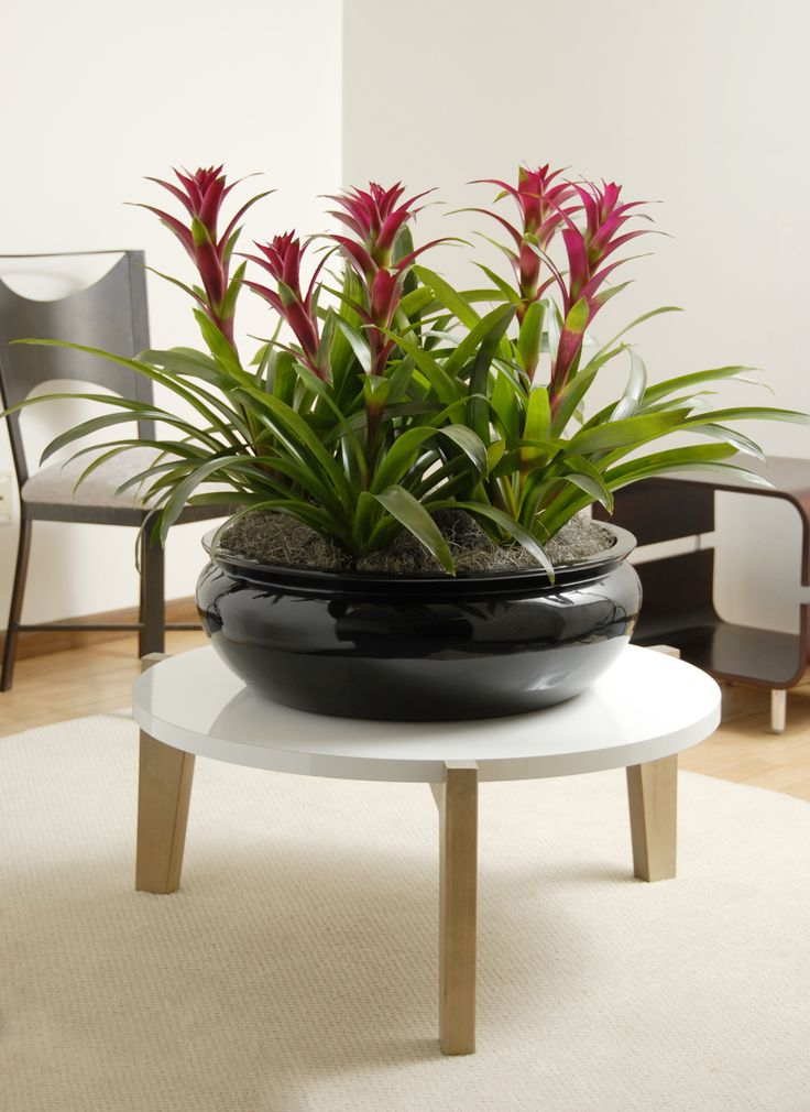 bromeliads in a beautiful fiberglass planter from. Black Bedroom Furniture Sets. Home Design Ideas
