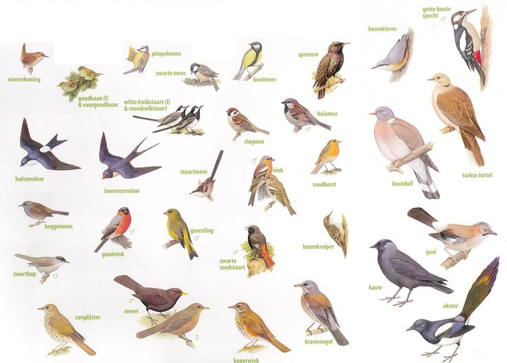Zoekkaart vogels