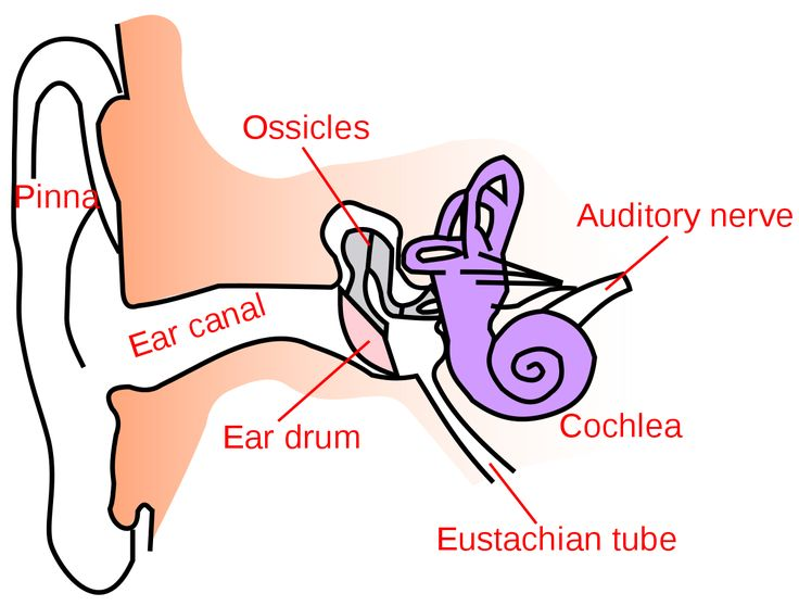 Ear canal wikipedia itchy ear canal