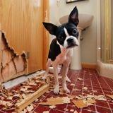 Puis-je punir mon chien quand il fait une bêtise ?