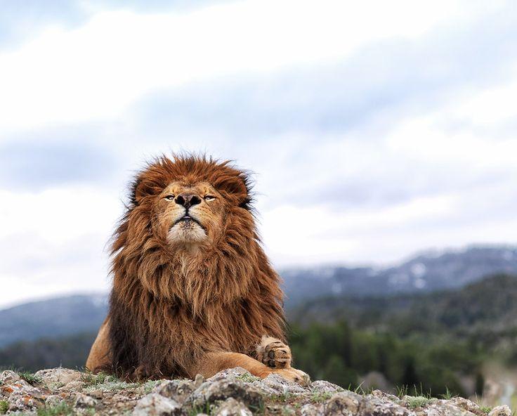 #Lion King