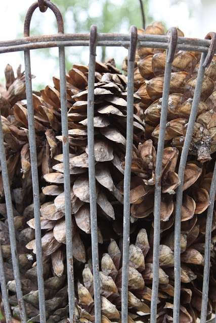 wire basket filled with pinecones