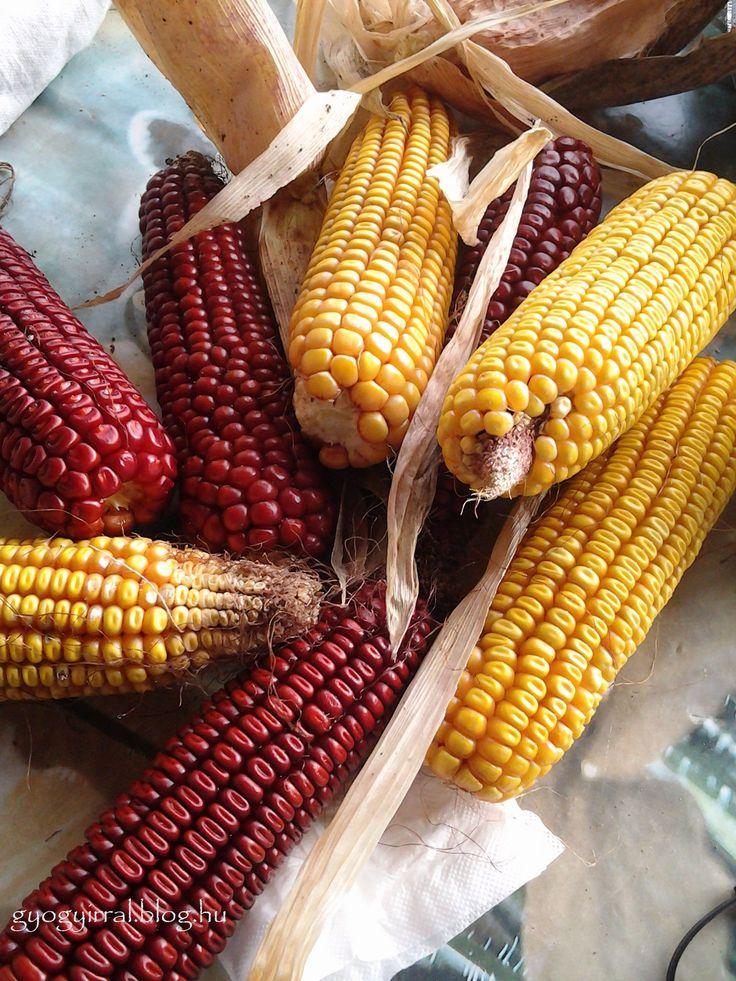 Kukoricatörés