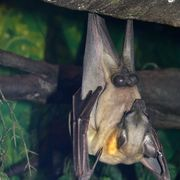 How to Get Rid of Bats in One Day | eHow