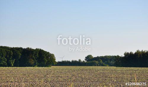 Blick über das Feld auf eine Windkraftwerk