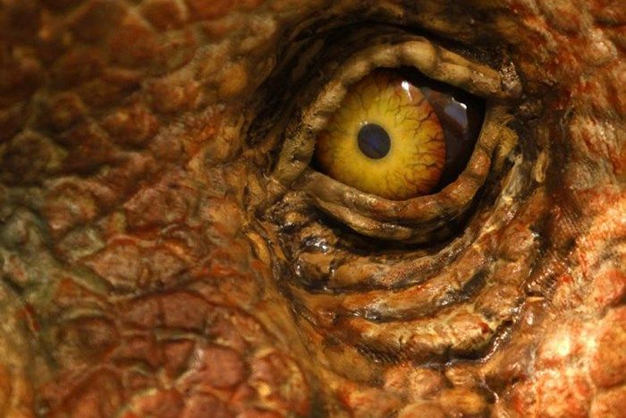 close up pictures of dinosaurs - Google Search