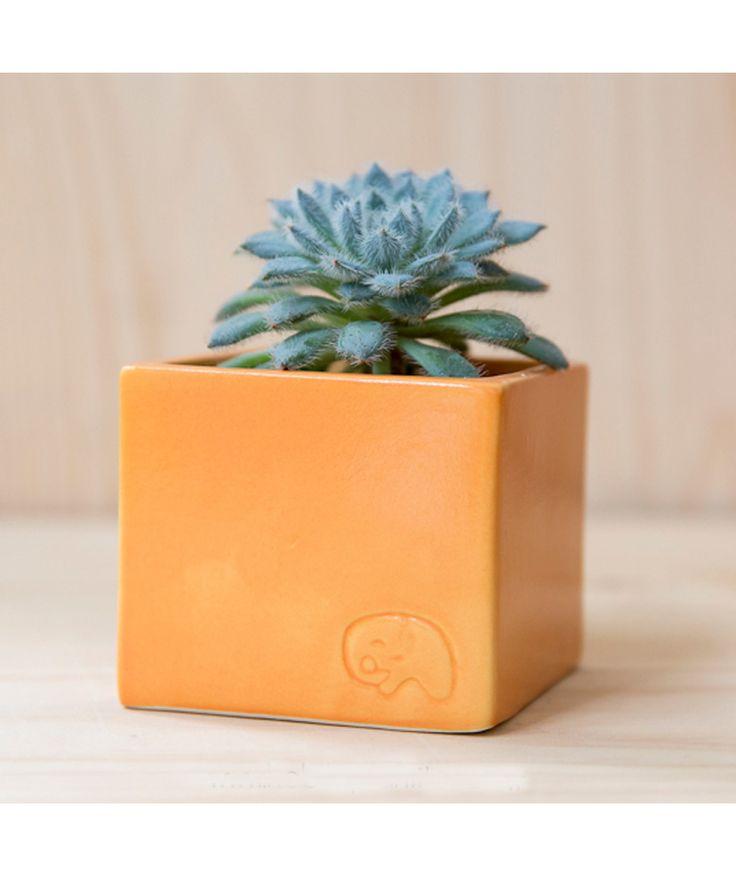 Pumpkin - Matera. $27.000 COP. Compra aquí --> https://www.dekosas.com/habibi-plantas