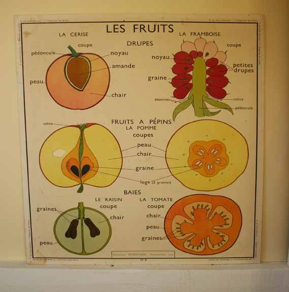 87 best Vintage French classroom poster images on Pinterest ...