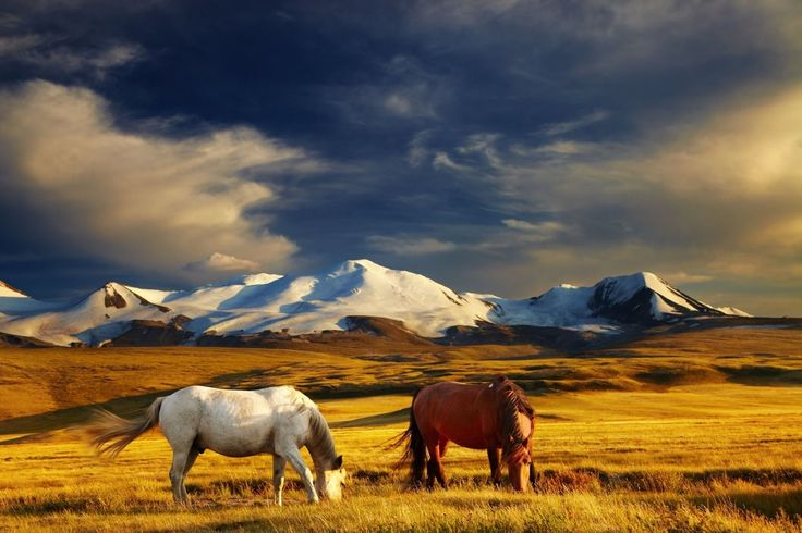 Montagnes dorées de l'Altaï, Russie