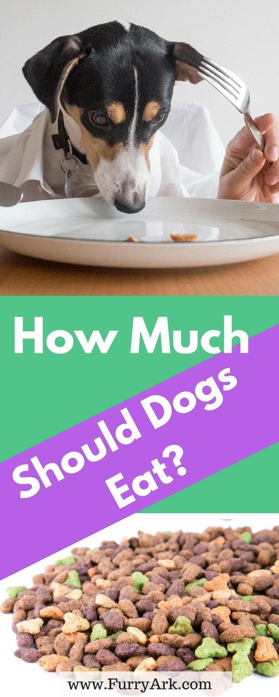 Dog Food Calculator How Much Food Should I Give My Doggy