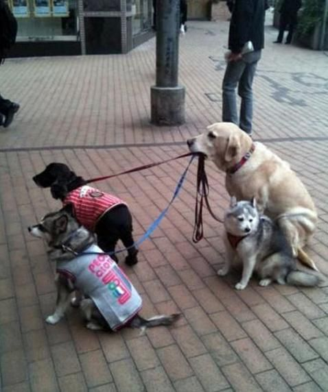 Smart Dog You'll Laugh At These People & Animals Who Do Multi-Tasking Like Pros • Page 3 of 6 • BoredBug