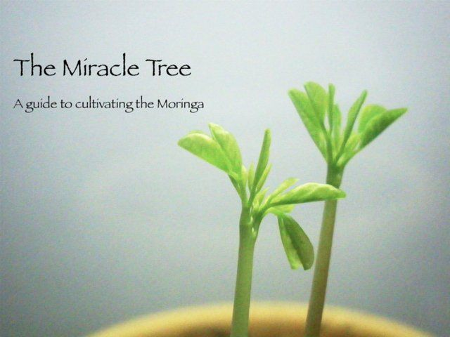 The Miracle Tree - A Guide to Cultivating the Moringa by Frederic Hensen. This video documentary has been produced for Village Volunteers, a nonprofit organization fighting malnutrition and poverty across the globe.  I was asked to complete this video as part of a community learning experience for a conservation project for my Winter 2011 Conservation Biology class with Martha Groom.  The intention is to inform a wide audience of the benefits of Moringa oleifera as a nutritional supplement…