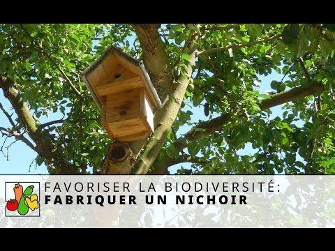 Installer un nichoir : les dix commandements à respecter   Ornithomedia.com
