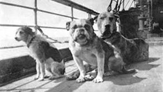 Remembering the dogs of the Titanic    The sinking Titanic killed more than 1,500 people on April 15, 1912, as well as several dogs. About 700 passengers did survive the historic shipwreck, though -- including two Pomeranians and a Pekingese.