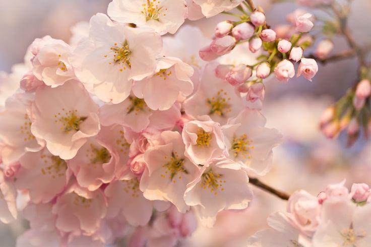 Spring Flowers Macro Hd Desktop Wallpaper Widescreen High Desktop
