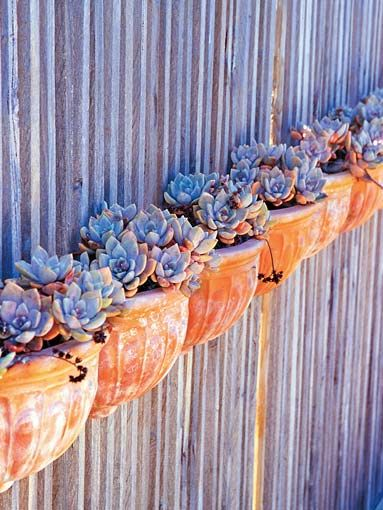 echeveria: Gardens Ideas Metals Fence, Fence Planters Ideas, Succulents Can, Succulents Wall, Corrugated Metals, Terracotta, Metals Fence Ideas, Wall Planters, Hanging Pots