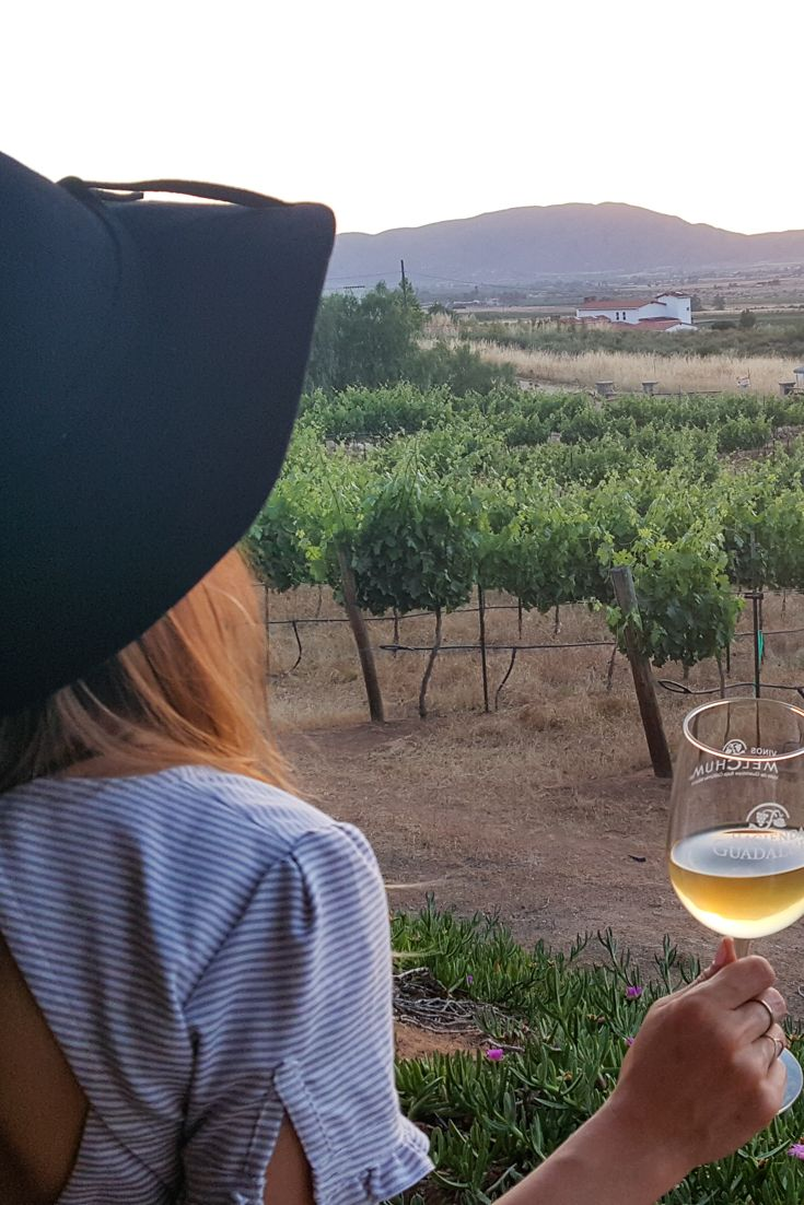 A Guide to Mexico's Wine Country: The Guadalupe Valley Wineries