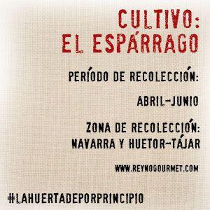 LA HUERTA DE PORPRINCIPIO: EL ESPÁRRAGO. En España son más habituales los turiones blanqueados en conserva, como nuestros estupendos espárragos de Navarra. Aunque la variedad Huétor (espárragos verdes), de la DO Huétor-Tájar, tampoco se queda corta en producción y calidad. http://blog.porprincipio.com/esparrago-una-verdura-de-oficina/#more-1253