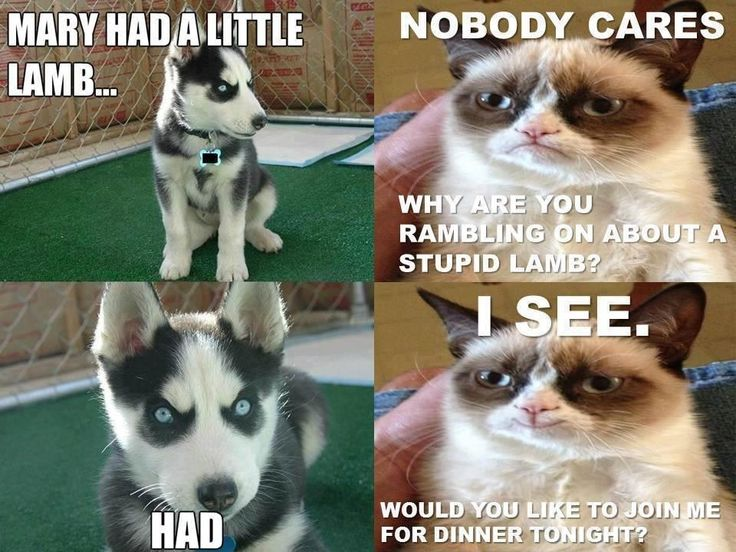 Grumpy cat and evil dog.
