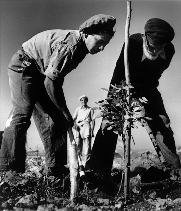 Robert Capa, tree planting in Israel, where they made the desert bloom.