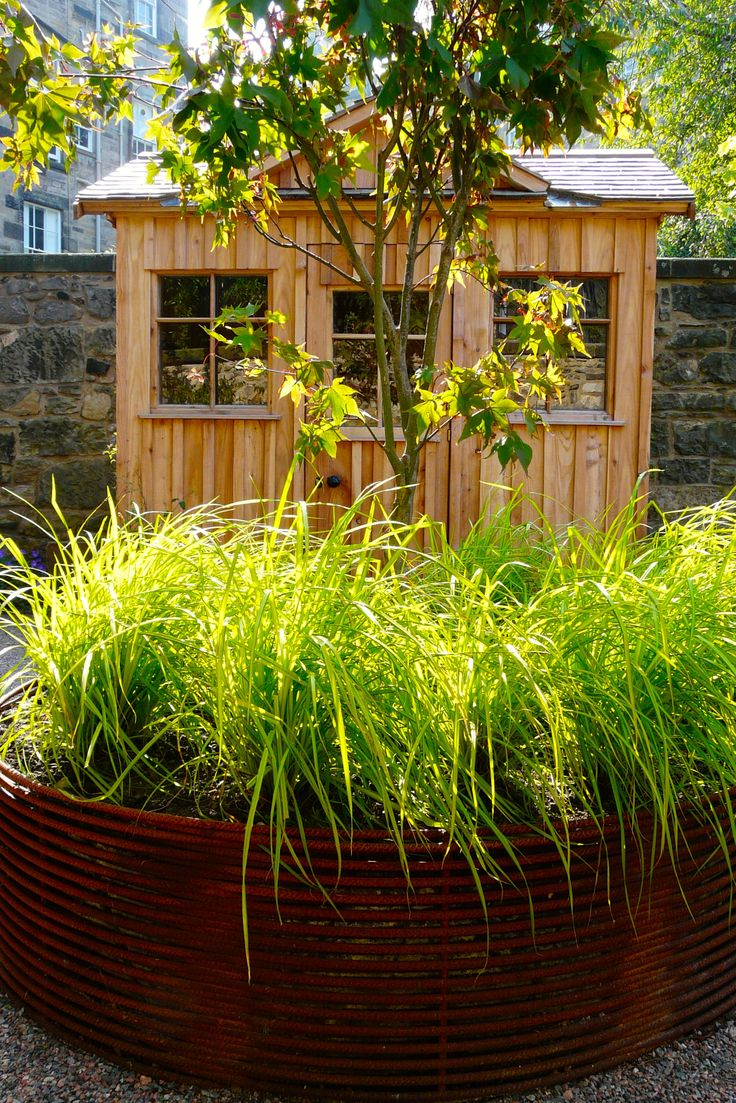 bespoke larch shed with rebar planter in front planting acer underplanted with carex elata