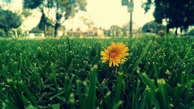 Esperanza flor