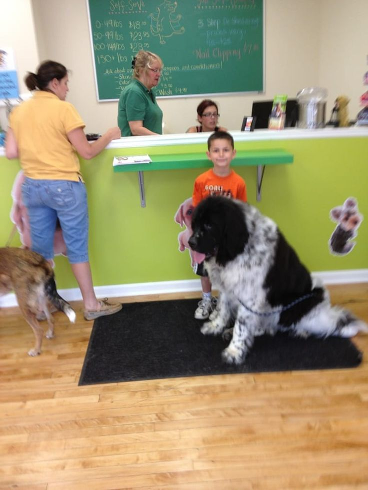 In n out dog wash garwood garwood pinterest business solutioingenieria Gallery