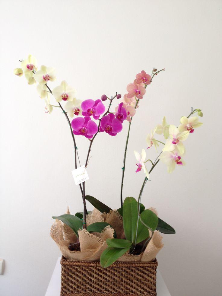 Canasta con 4 orquídeas